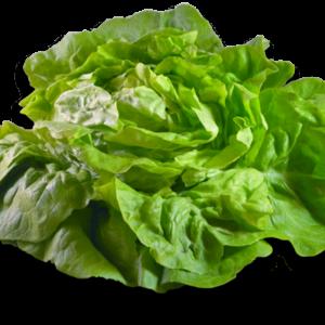 Salade – Laitue – La pièce 1