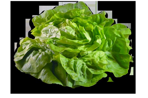 Salade - Laitue - La pièce