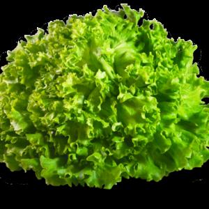 Salade - Batavia - La Pièce